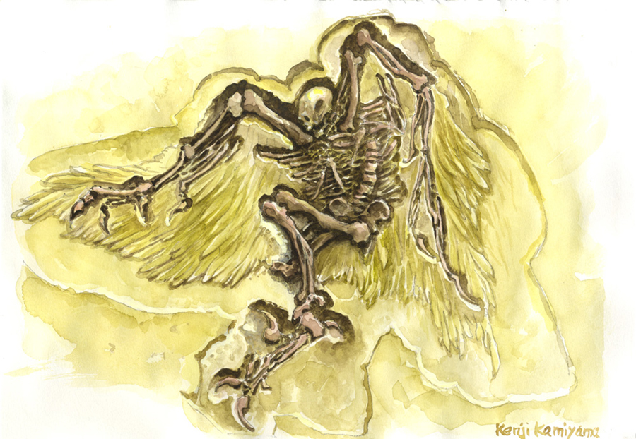 fossil-of-the-angel